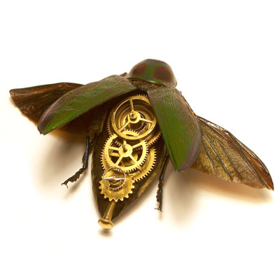 abuprestidae.jpg