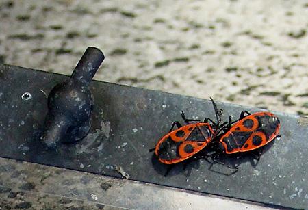 Death Bugs