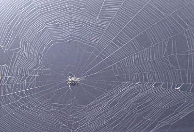 orbweaver spider on web