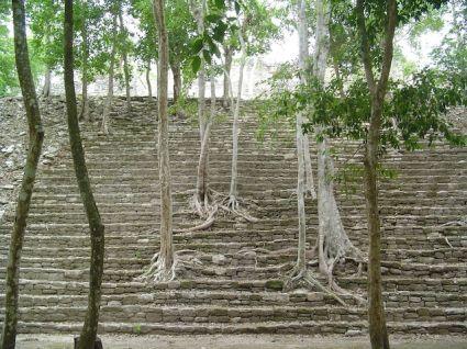 Maya Cycle