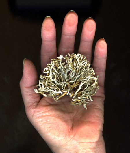 Marja-Leena Rathje Hand with Kelp