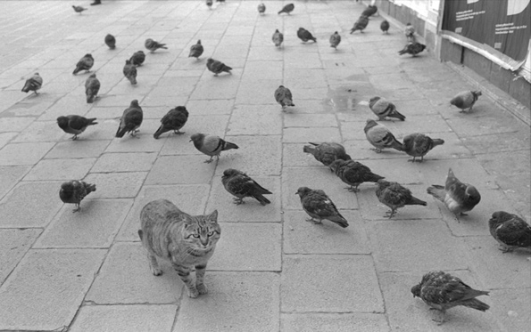 Cat and Pigeons by Monika Anderson
