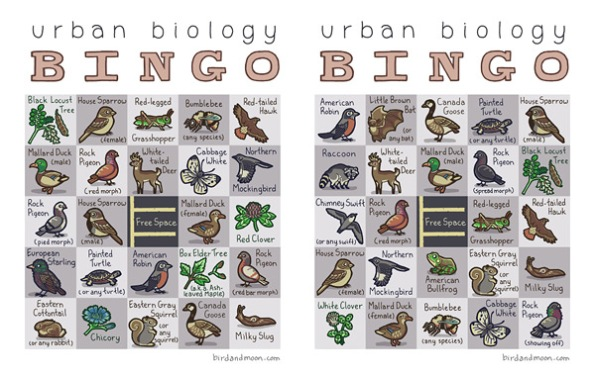 Urban Biology Bingo